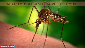 Why Do Mosquitoes Bite Some People More