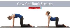 Cow cat back yoga pose stretch
