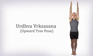 Urdhva Vrksasana (Upward Tree Pose)