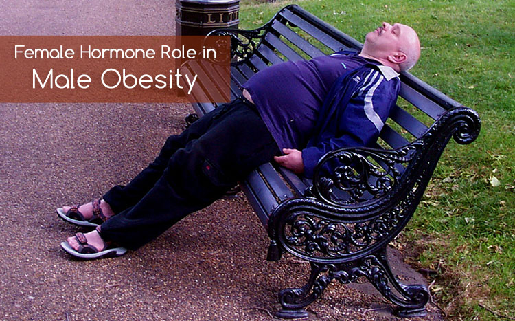 Could female hormones contribute to male obesity?