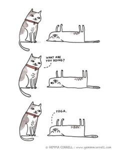 funny-yoga-cats