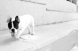 dog walking down a pavement
