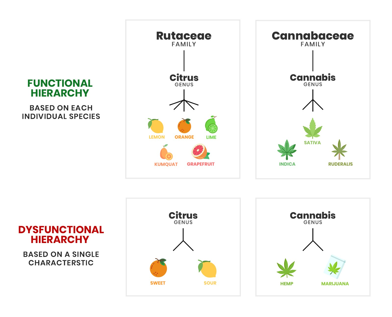 Classification Chart for Cannabis